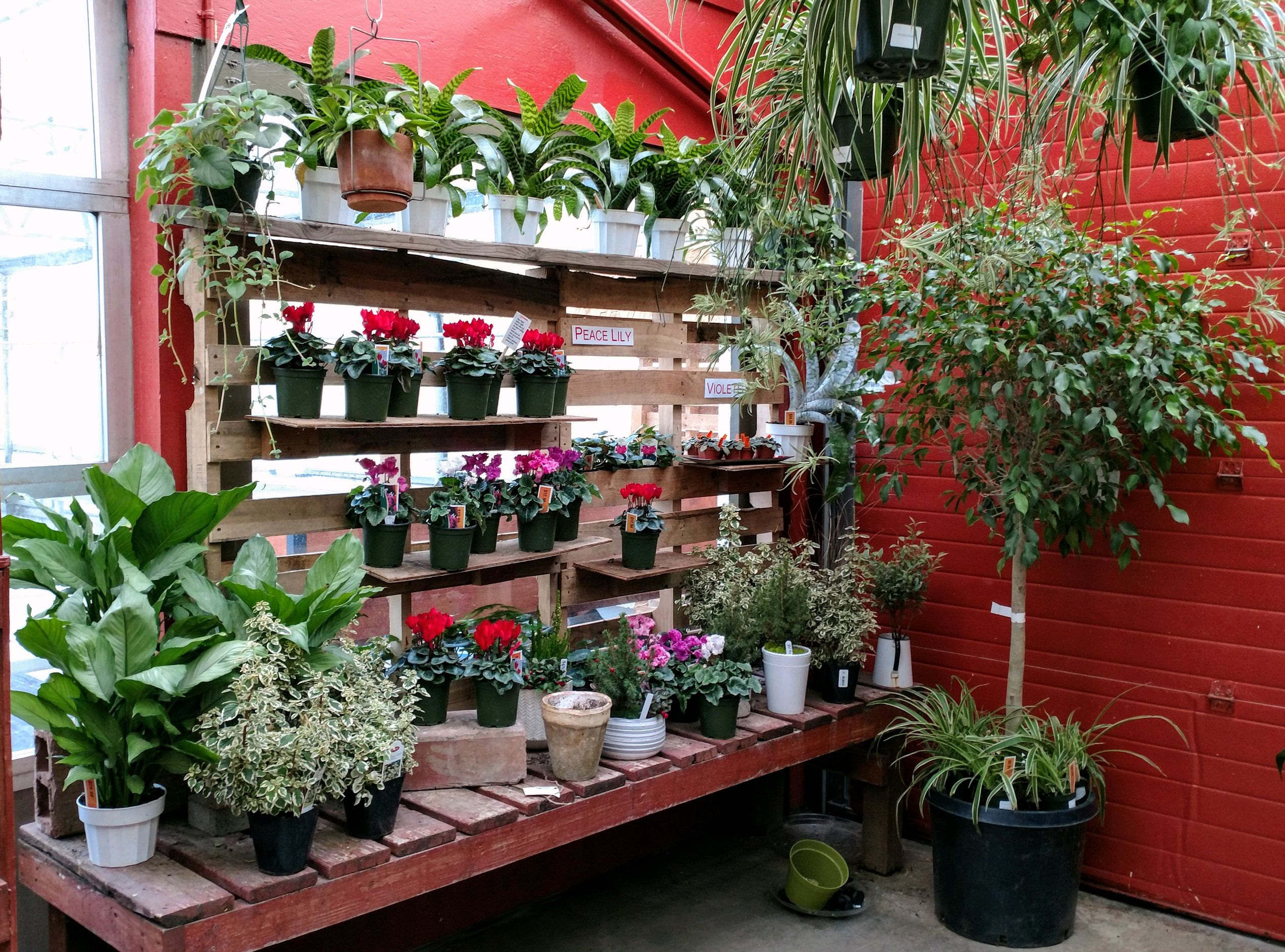 Spruce up your home with a new houseplant! New shipments come in weekly